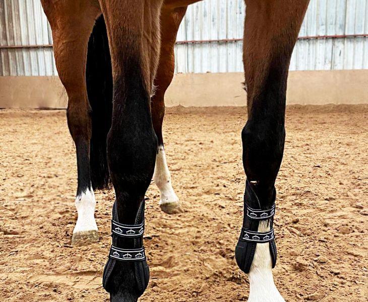 ostéopathie animale, probleme articulaire cheval, ostéologie, chien, maréchal ferrant
