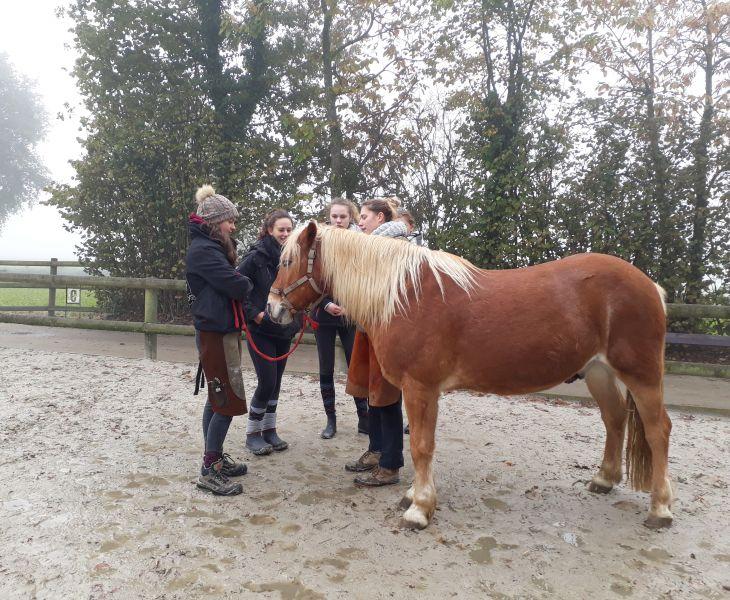 probleme articulaire cheval, ostéopathe, ostéopathie vétérinaire, ostéopathie équine