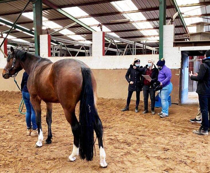 soin cheval, formation, osteo