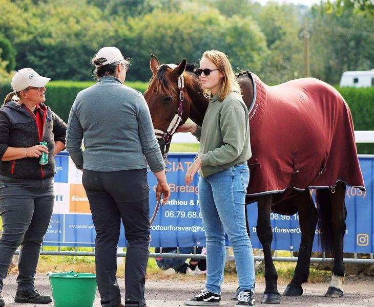 ostéopathe, santé cheval, cheval, osthéopathe
