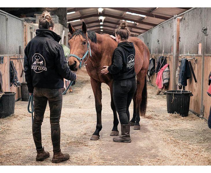 ostéopathie équine, psychologie équine, biomécanique, probleme articulaire cheval