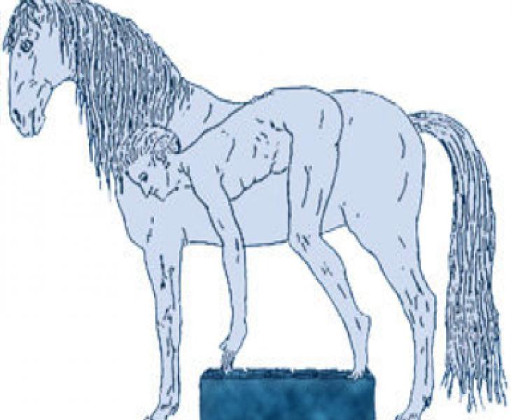 ostéopathie équine, psychologie équine, ostéopathe animalier mécaniste équine, maréchal ferrant, ostéopathe animalier mécaniste équin
