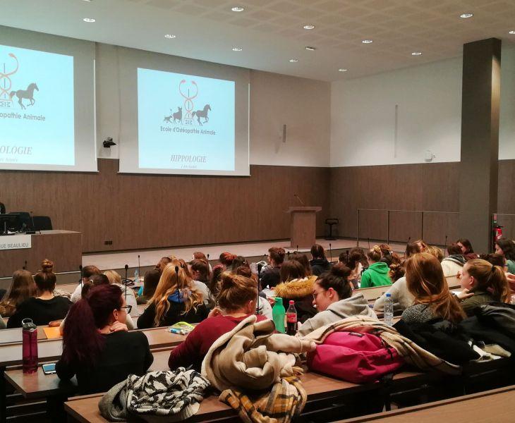 psychologie canine, chien, rebouteux, ostéopathe animalier mécaniste