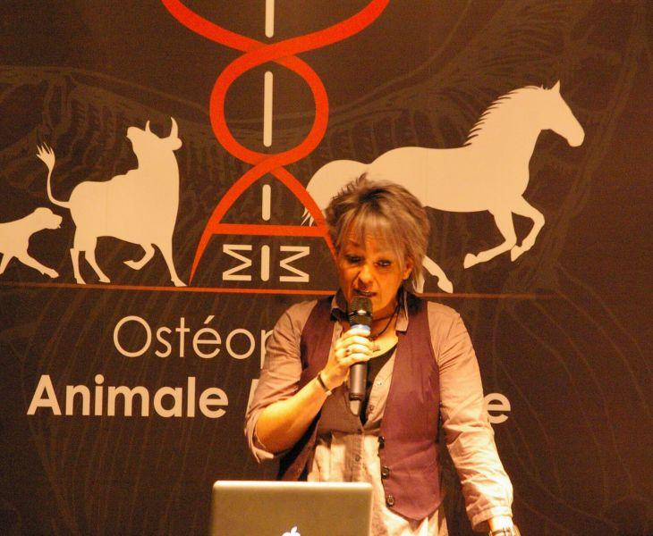ostéopathe, myologie, ostéologie, soin cheval, chat, ostéopathe équin, osthéopathe