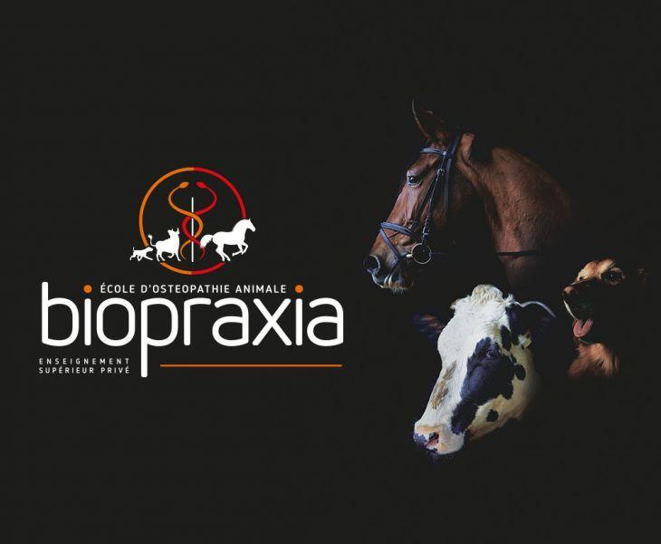 rebouteux, ostéopathie animalière mécaniste, osthéopathe, ostéopathie vétérinaire, devenir ostéopathe équin