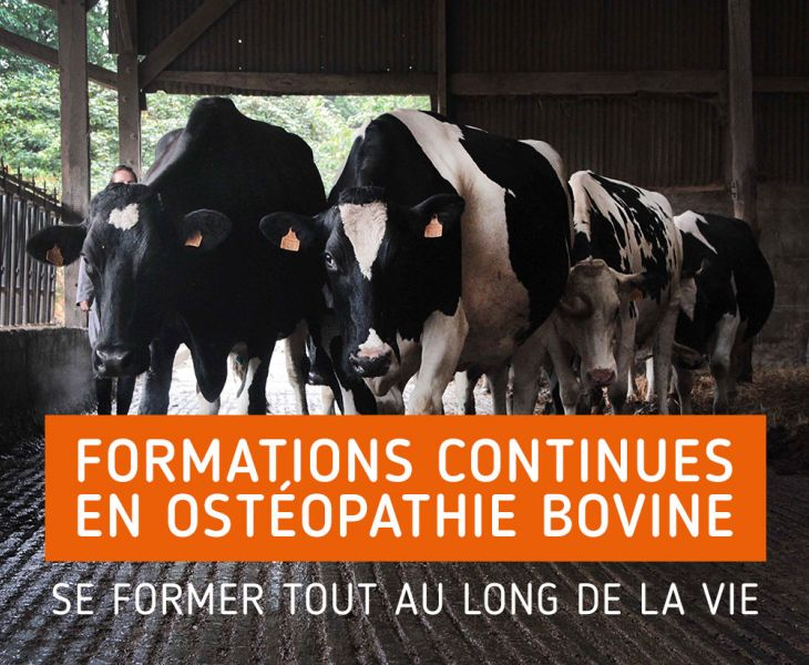 ostéologie, étiopathie vétérinaire, santé cheval