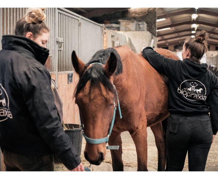 ostéopathie équine, cheval, formation, ostéopathe équin
