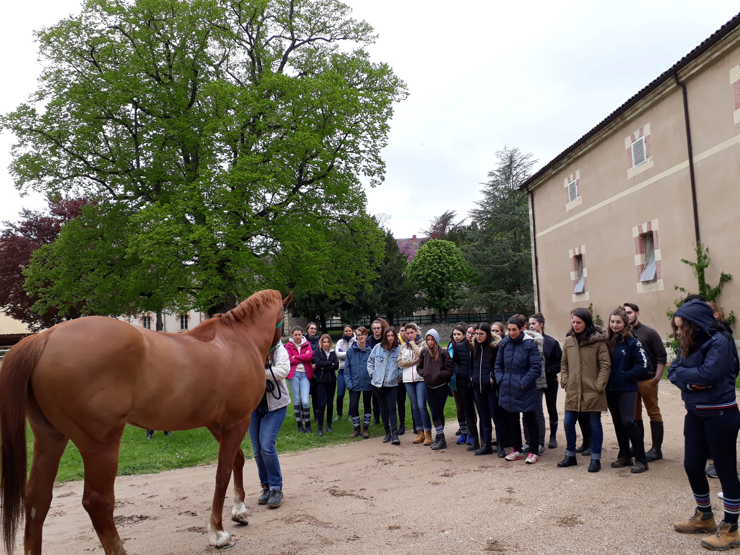 stagiaires-osteopathie-animale-cluny